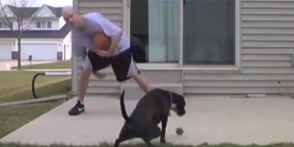 Basketball-Dog-Fail